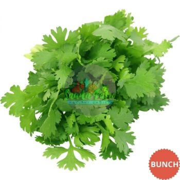 Coriander Leaves (Dhania Patra), 1 Bunch