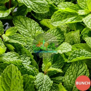 Mint Leaves (Pudina Patra), 1 Bunch